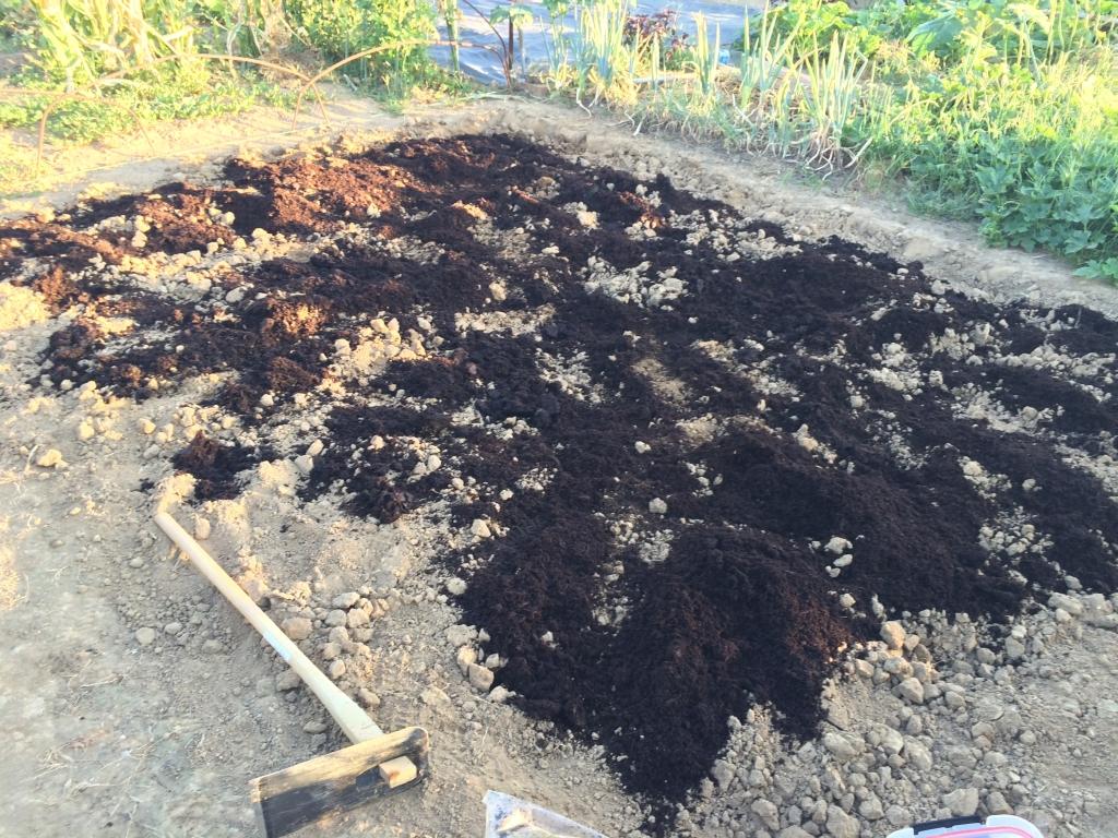土にバーク堆肥をまいた
