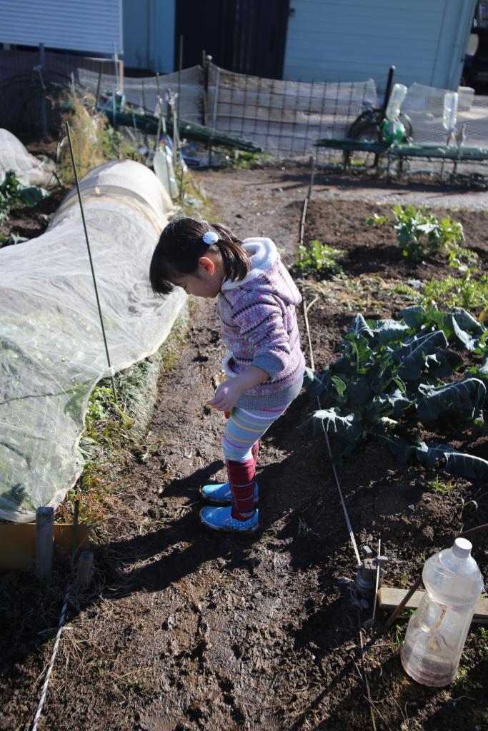 霜柱が溶けて畑がぬかるんでいた。娘は不服そう・・・