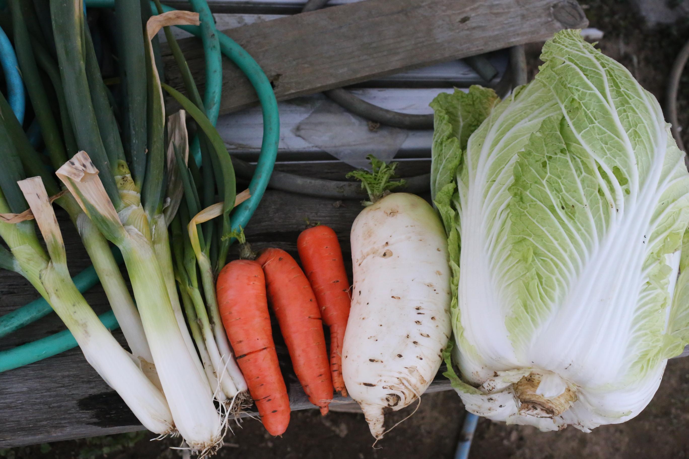 2015年1月31日に収穫した野菜