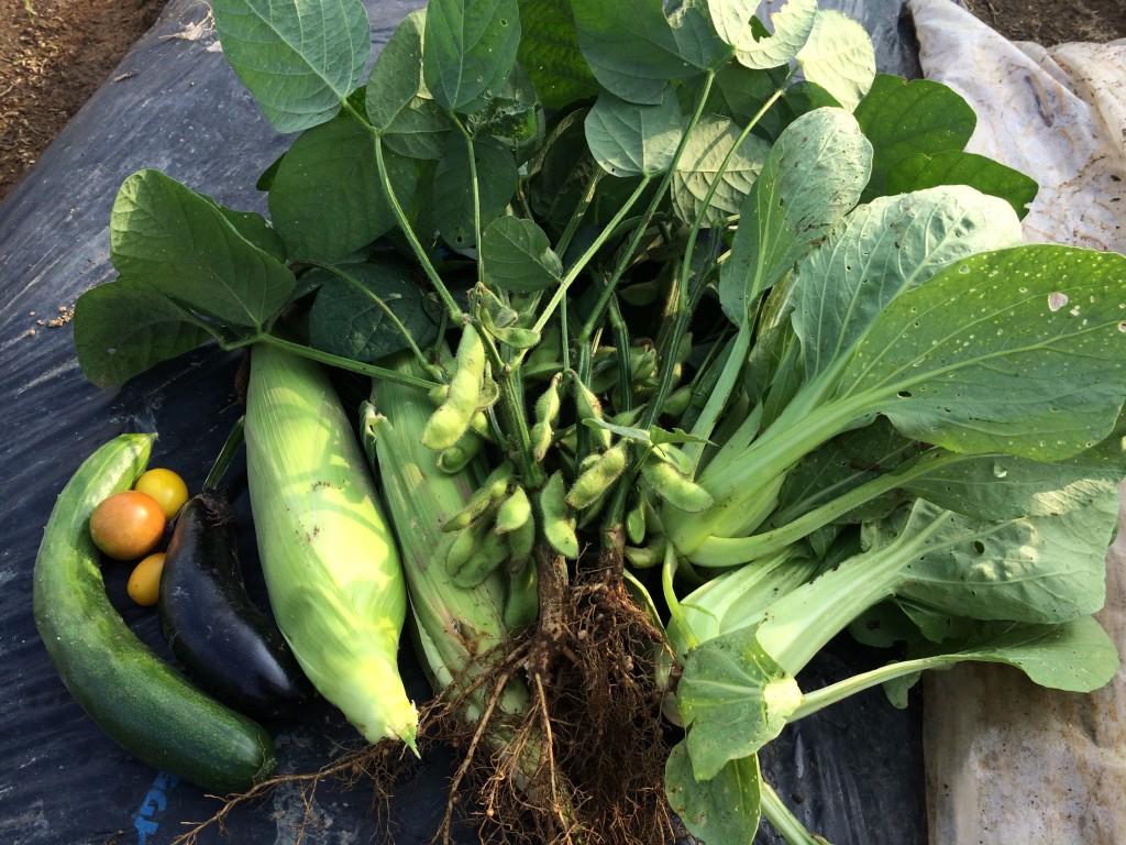 梅雨の合間の収穫物