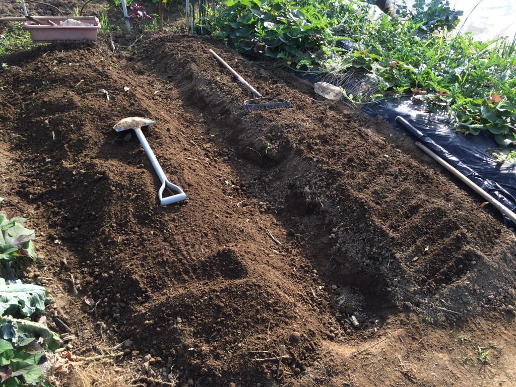 ニンジン用に耕している畝