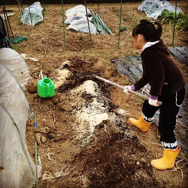 ジャガイモの植え付けに向けて畑を準備。堆肥、米ぬか、もみ殻のスペシャルブレンドで今年は行きます。娘のレーキを持つ仕草もこなれてきた(^o^) #家庭菜園 #サイエナー #わたしの野菜生活 #野菜 #畑の準備 #ジャガイモ #米ぬか #もみ殻 #牛糞堆肥 #スペシャルブレンド - 畑での一コマ