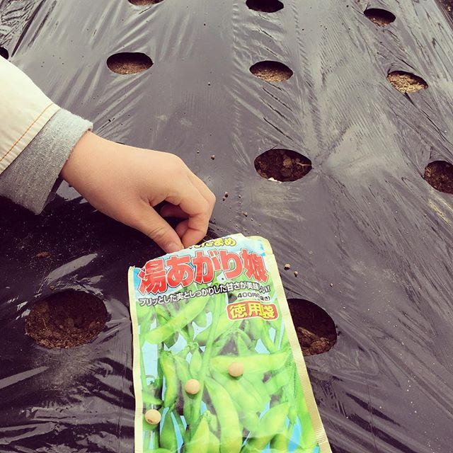 暖かくなってきたのでそれそろエダマメを(^o^)これから1週間ごとに4回に分けて種をまきます。#家庭菜園 #サイエナー #わたしの野菜生活 #野菜 #エダマメ - 畑での一コマ