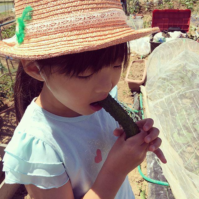 1週間ぶりの畑。キュウリがなっていたので収穫して丸かじり。甘くて美味い。ナスもできていたので小さめで収穫。早く来い来い、キュウリとナス地獄(^^;;島らっきょうと玉ねぎも収穫して半日天日干し。#家庭菜園 #貸し農園 #サイエナー #わたしの野菜生活 #野菜 #キュウリ #ナス #ジャガイモ #初物 #玉ねぎ #島らっきょう #収穫 - 畑での一コマ