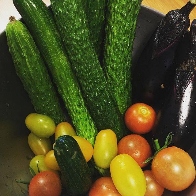 畑へ行くたびにキュウリが大量に採れるナスとミニトマトも勢いついてきた。これから数日の雨でキュウリはさらに勢いがつきそうだ(汗)#家庭菜園 #菜園 #貸し農園 #サイエナー #わたしの野菜生活 #野菜 #キュウリ #ミニトマト #ナス #収穫 - 畑での一コマ