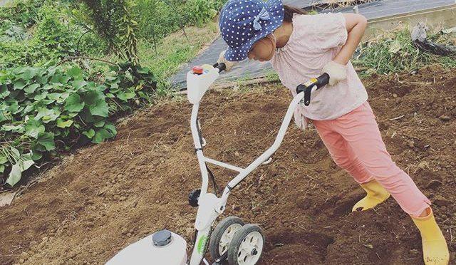 生姜もサトイモも不調なのに雑草だけが元気 ということで畑をリセット。