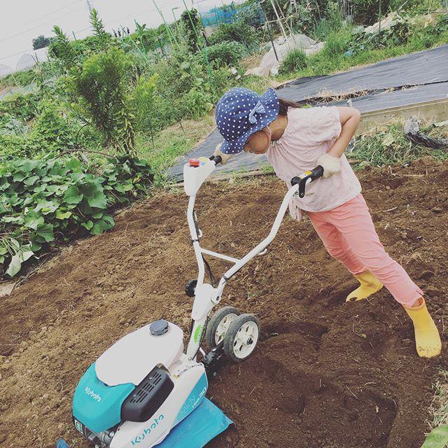 なかなか時間が取れなかったので畑は草まみれ生姜もサトイモも不調なのに雑草だけが元気 ということで畑を一旦リセット。来週から秋以降の野菜の植え付けだー。#家庭菜園 #菜園 #貸し農園 #サイエナー #わたしの野菜生活 #野菜 #耕運機#リセット - 畑での一コマ