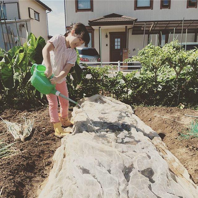 秋の植え付けは、少し遅れてしまったけれど人参、八潮と越谷のネギからスタート。次は島ラッキョウとワケギとブロッコリーと九条ネギ。その次はほうれん草と大根と玉ねぎの苗作り。この時期は忙しい#家庭菜園 #菜園 #貸し農園 #サイエナー #わたしの野菜生活 #野菜 #長ネギ #人参 - 畑での一コマ