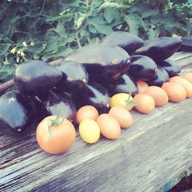 会社のノー残業デーにナスとトマトを収穫こんな時間の使い方もたまにはいいなぁ。#家庭菜園 #菜園 #貸し農園 #サイエナー #わたしの野菜生活 #野菜 #ナス #ミニトマト - 畑での一コマ