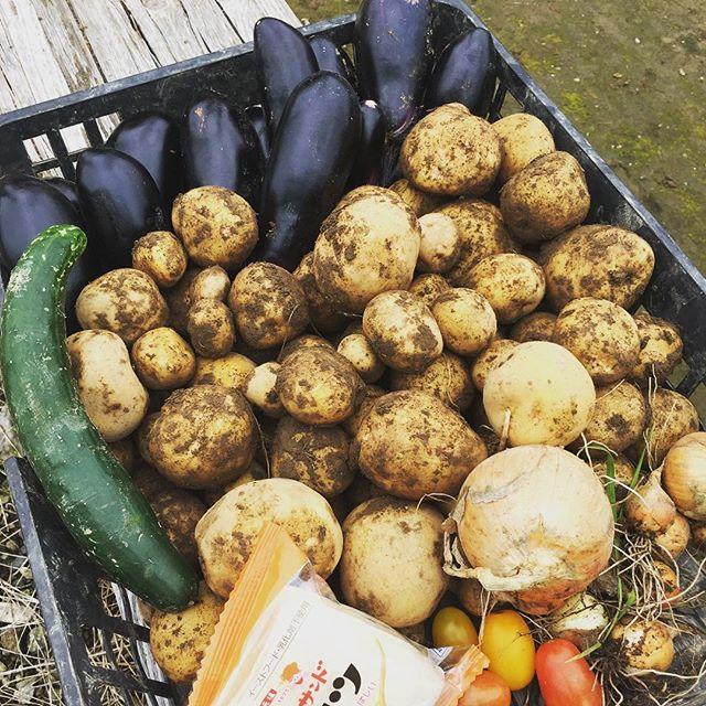 ナス科の野菜を朝採り初物のキュウリと取り残していた玉ねぎも収穫後は畑でご飯🥪#家庭菜園 #菜園 #貸し農園 #サイエナー #わたしの野菜生活 #野菜 #ナス #ミニトマト #ジャガイモ #キュウリ - 畑での一コマ