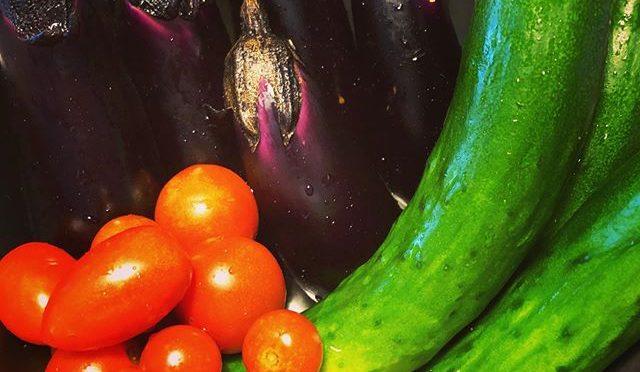 夏野菜にスイッチが入ってきた – 畑での一コマ