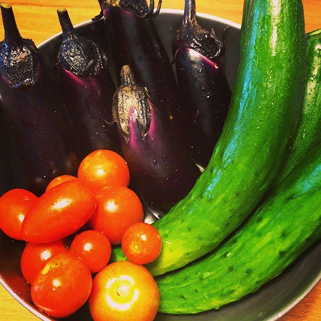 夏野菜にスイッチが入ってきた(*´∀`*)大量に浅漬けでも作るかなー。#家庭菜園 #菜園 #貸し農園 #サイエナー #わたしの野菜生活 #トマト #ナス #キュウリ - 畑での一コマ