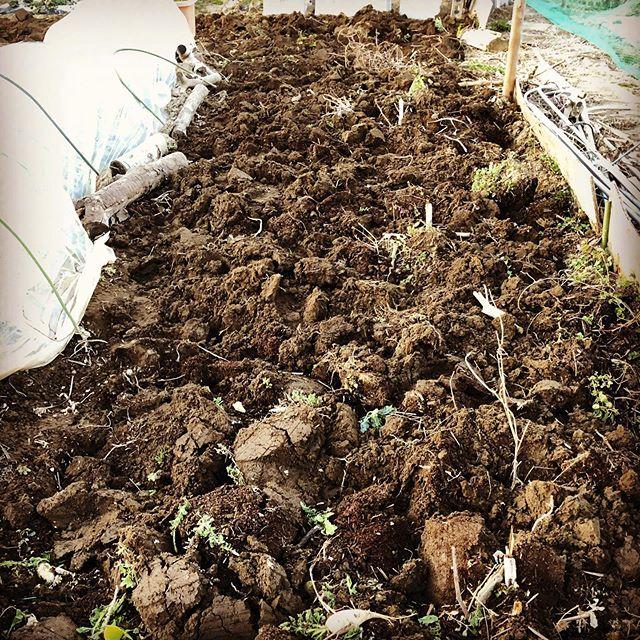 春夏野菜のために土起こし。次の日には筋肉痛と手にマメが。。。やれるとにやっておかないと。#家庭菜園 #菜園 #貸し農園 #サイエナー #わたしの野菜生活 #土起こし - 畑での一コマ