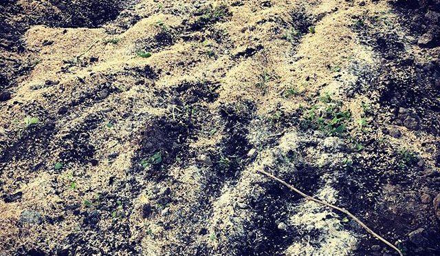 そして今日も土起こし – 畑での一コマ