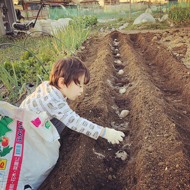 そして今日はじゃがいもの植え付け。一列植えで、種芋と種芋の間には肥料と堆肥を一握り。初めて参考書通りの植え方をしてみた。成績はいかに!#家庭菜園 #菜園 #貸し農園 #サイエナー #わたしの野菜生活 #じゃがいも - 畑での一コマ