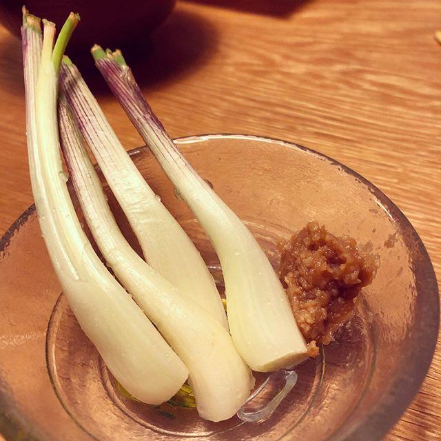 島らっきょうを試し採り。まだ小さいエシャロットで、薄皮をむいて味噌をつけて食べれたー元気つけないと。#家庭菜園 #菜園 #貸し農園 #サイエナー #わたしの野菜生活 #島らっきょう - 畑での一コマ