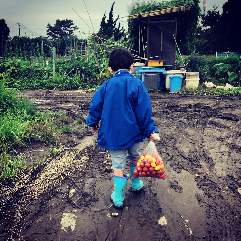 背中。収穫が1日空いてしまいトマトは袋にいっぱいに。キュウリも5本採れて供給過剰…#家庭菜園 #菜園 #貸し農園 #サイエナー #わたしの野菜生活 #トマト #ソバージュ栽培 #キュウリ - 畑での一コマ
