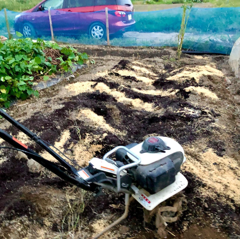 仕事終わりに畑へ。石灰を撒いていたところに、籾殻と堆肥と肥料を耕運機で混ぜ込んだ。この場所は、イチゴと辛味大根、ほうれん草、パクチーの種を蒔いた。ちゃんと芽が出るかな。ワクワク。#家庭菜園 #菜園 #貸し農園 #サイエナー #わたしの野菜生活 #幸運機 - 畑での一コマ